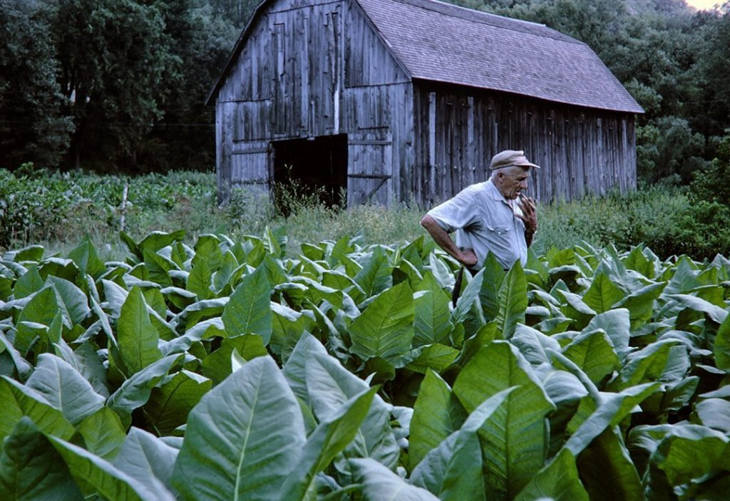 Tobacco Farmer and barn